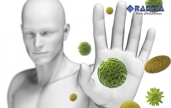 medicamento para fortalecer sistema inmune